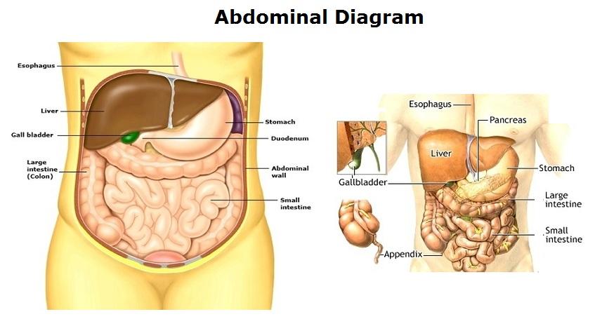 abdominal-diagram