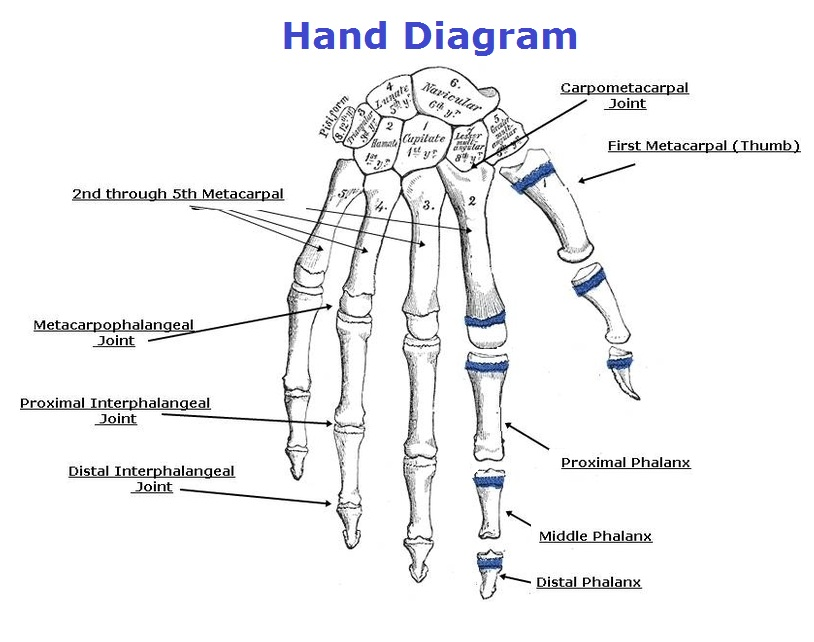Magnificent Hand Diagrams Chart Diagram Charts Diagrams Graphs Best Wiring Cloud Cosmuggs Outletorg