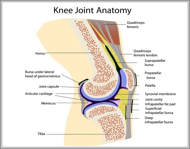 Knee Diagram | Chart Diagram - Charts, Diagrams, Graphs. Best Images ...
